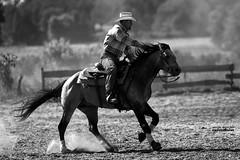 Dans l'action... (windtalker40) Tags: horses horse cheval cowboy quarterhorse chevaux quitation reining westernriding