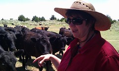 I think @stargardener had a good time with the cattle.