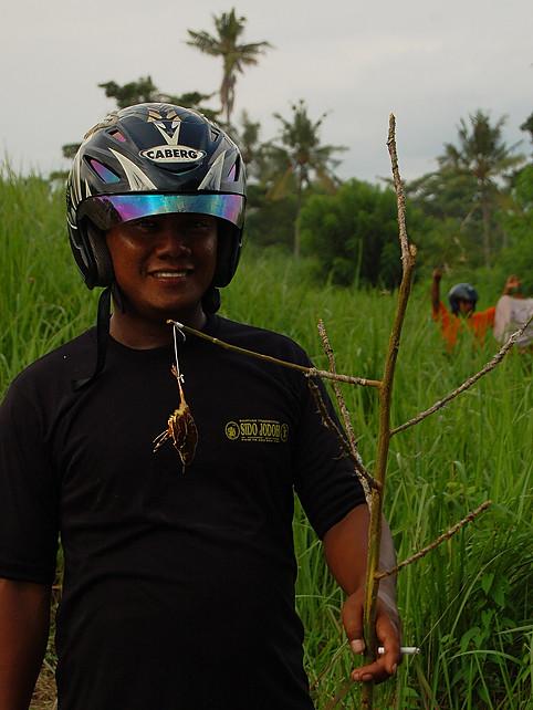 _Bali_fowlers_