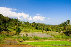 IMG_9048-Edit-9MP (Dmitry Rukhlenko Travel Photography) Tags: summer bali mountain tree green beautiful field rural season indonesia landscape asian asia rice gardening farm traditional scene palm east crop plantation tropical agriculture indonesian scenics balinese harvesting terraced cultivated beautifulbali
