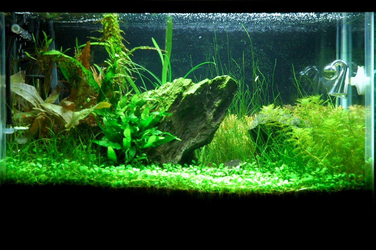 10 Gallon Aquascaping Journal Page 2 Aquatic Plant Central