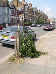 Snapped tree, Salisbury Road
