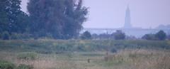 Hare in the Blauwe Kamer (sjoerdphoto) Tags: hare rhenen cunera