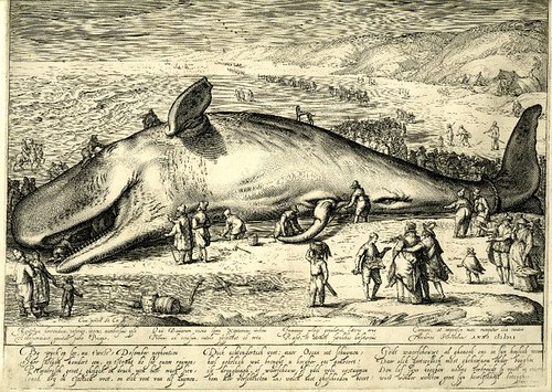 Beached Whale - Jacob Matham 1602