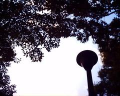 【写真】VQ1005で撮影した朝の風景(木々の間の街灯)