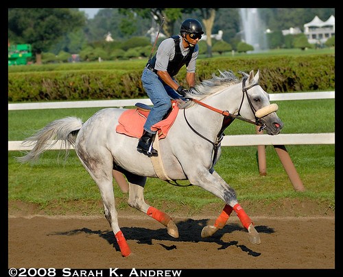 Dapple grey thoroughbred racing