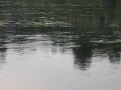 Upė (juokas) Tags: nature upe gamta upė