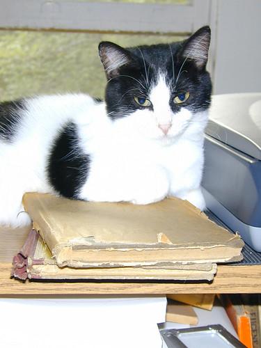 Kitty Literate