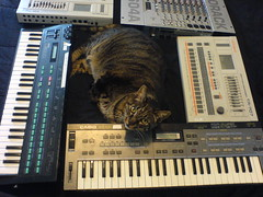 Techno Cat (audioel) Tags: cat synths apu cz101 tr707 dx100