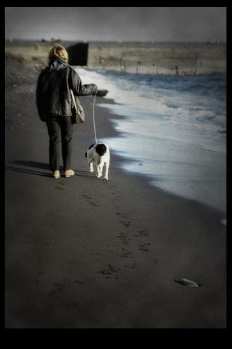 A dogs life ( or last promenade)