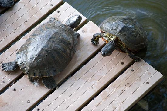 turtle_9620