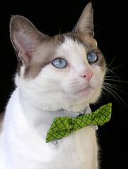 Grandpa Ernie's Green Pet Bow Tie