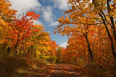 Fabulous Fall Foliage (KarenR-TB) Tags: autumn fall leaves minnesota foliage naturesfinest grandportage autumn2008images