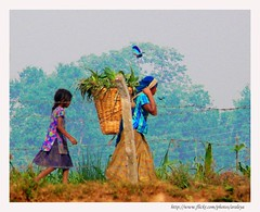 Same Blues (Araleya) Tags: life leica morning travel blue nepal people bird walking flying women basket walk vegetable together bluebird chitwan lively morningwalk fz50 womanatwork peoplewatcher panasoinc terai araleya saarc raptiriver farmlabour southnepal bulebirds fewawildliferesort