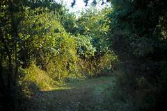 To the Secret Garden (TMMY PHTOG) Tags: canon eos 350d virginia moore va claude sterling dslr adobelightroom eff18ii tamiro