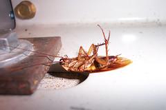 Shhh, He's Sleeping (Solid Bond) Tags: sleeping newyork roach