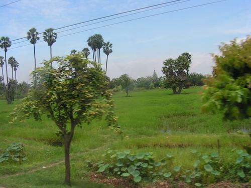 Flora & Fauna - Thailand
