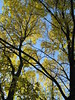 Face Of An Ash, Minneapolis, Minnesota, October 2008, photo © 2008 by QuoinMonkey. All rights reserved.