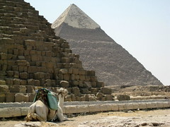 Pyramids of Giza / Lower Egypt () Tags: africa city vacation holiday art cemetery grave graveyard sand ancient ruins flickr king sitting desert northafrica tomb egypt fanny graves camel mausoleum kings pharaoh limestone goldenage backside publicart kneeling ramadan stern rtw gypten egitto necropolis vacanze roundtheworld ancientegypt afrique khufu cheops  khafre chephren derrire antiquities globetrotter greathouse saharadesert northernafrica   pyramidsofgiza worldtraveler nekropolis gizanecropolis rakhaef aljizah loweregypt  khafra khafrespyramid 4thdynasty khufuspyramid  nazlatassamman    ivdynasty  suphis rachaf 4 desertumafricanum