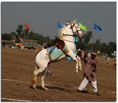 """(rajoya sadaat) hello """"ppg""""hows going  """"concordians"""" here,,,,,, what a fantastic day it was , and special thanks to asim bhai""""surgeon_ asim""""  who made it possible ,and guys best wishes for Sunday (TARIQ HAMEED SULEMANI) Tags: pakistan horses glory tariq galope tentpegging golddragon sulemani llovemypics rajooasadaat"""