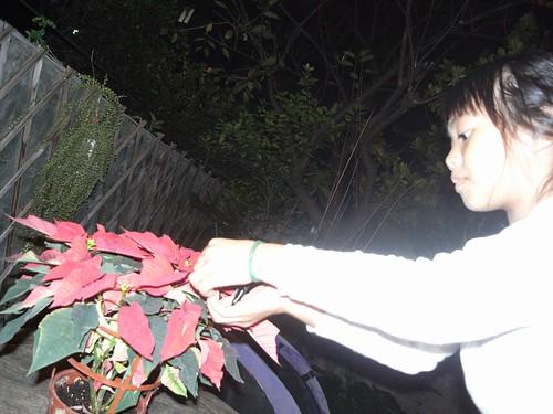 你拍攝的 娃娃放生蝴蝶。