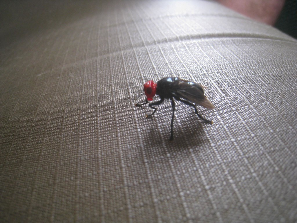 This red-headed fly hitchhiked in our safari truck for several minutes