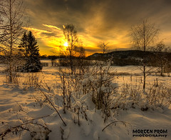 Golden hour all day (mortenprom) Tags: winter light sunset sky orange sun white snow plant black color tree green nature grass yellow norway clouds forest sunrise landscape norge leaf december day tour hiking tripod skandinavien norwegen sunny wideangle explore noruega scandinavia 2008 hdr goldenhour noorwegen noreg wideangel sigma1020mm sandvika tanum skandinavia naturesfinest ringi vestmarka mywinners canoneos40d theunforgettablepictures vosplusbellesphotos mortenprom tanumridesenter vestmarkveien