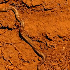 Psst (Claudio ) Tags: chile earth snake ground soil culebra suelo tierra temuco serpiente araucania conunhuenu