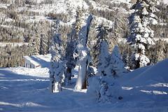 POW (Woodward Tahoe) Tags: boreal