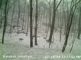 Katonah SnowCam