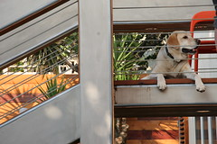 Exterior Stairs Detail with Labrador Retriever (Jeremy Levine Design) Tags: california house green architecture modern design losangeles labradorretriever renovation remodel stucco sustainable addition sustainability renewable eaglerock dwelling losangelesarchitecture