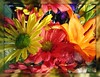 Dedication to my friends the Pksingh Family - Explore #449 12/23 (dart5150) Tags: flowers orange macro green colors yellow cupcakes thankyou tomyfriends deepcoral