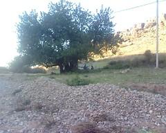 Caroubier El Menzel وادي المنزل