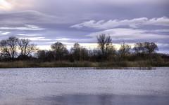 Wetlands: Soft Light (Tim Blessed) Tags: uk nature landscapes countryside lakes wetlands ponds singlerawtonemapped