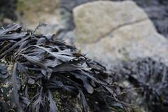 IMG_4375 (Graham Saltern) Tags: wales beaches stdavids