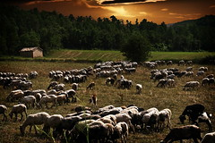 Buclica (Luciti) Tags: espaa landscape spain sheep paisaje catalonia catalunya showmustgoon catalua vicoli freixenet ovejas buclica theme brilliant~eye~jewels laformadellenuvoletheshapeoftheclouds thesuperbmasterpiece luciti sky colorfullandscapeseascape multimegashotankygov rockinhorsecorralfriends