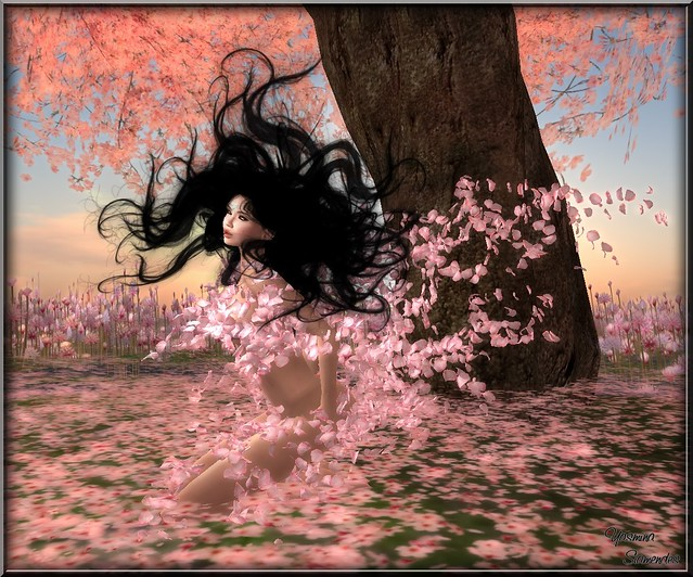 Dream of Blossoms