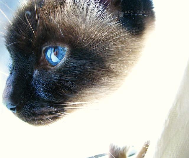 cat eyes, sputnik