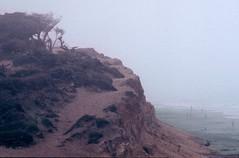 The Beach Fog (moedonno) Tags: bill foggy rizzo