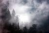 Tree Mist (justb) Tags: trees cloud mist mountain tree silhouette misty canon hope rainforest bc cloudy layers justb 40d