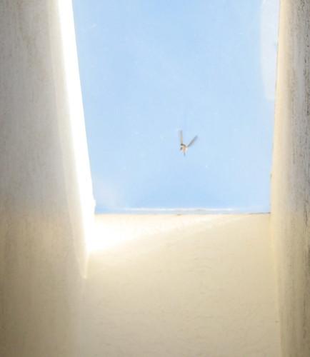 freakin hummingbird