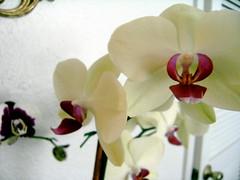Orchids, Orchids