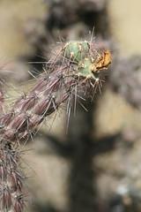 IMG_0773 (quinn.anya) Tags: arizona cactus saguaronationalpark