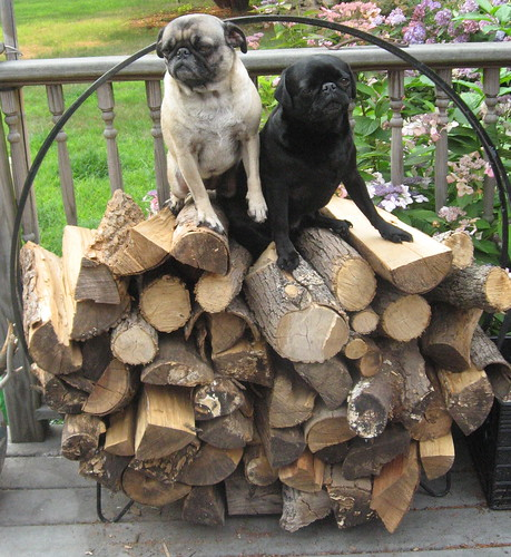 Woodpile, Last One