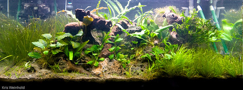 40G - Just Planted