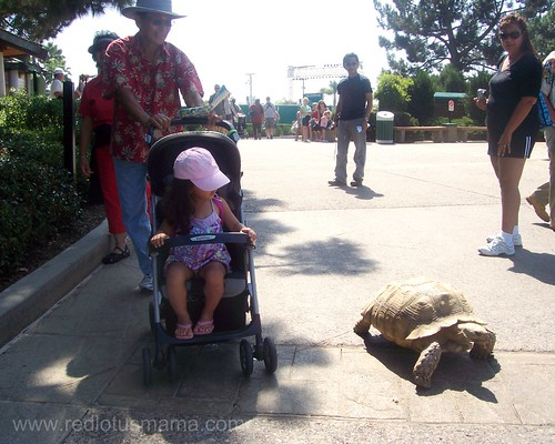 walking with a turtle