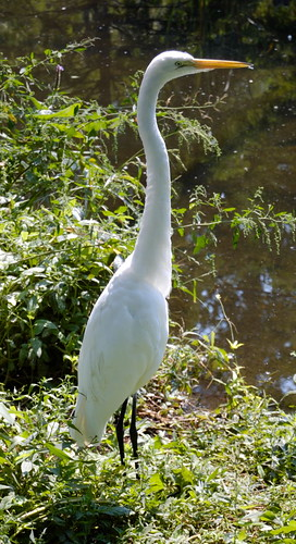 Saint Louis Zoological Garden, in Saint Louis, Missouri, USA - heron