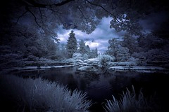 Japanese garden in Seattle (infrared). (coulombic) Tags: seattle blue canon japanesegarden pond branches foliage infrared 5d canon5d vignette canoneos seattlewa canoneos5d infraredphotography gabefarnsworth canonef1635mmf28l maxmaxcom canoninfrared converteddigitalcamera coulombic ldpllc canoneosinfared