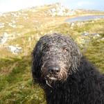 Dougal air Beinn na Seamraig thumbnail