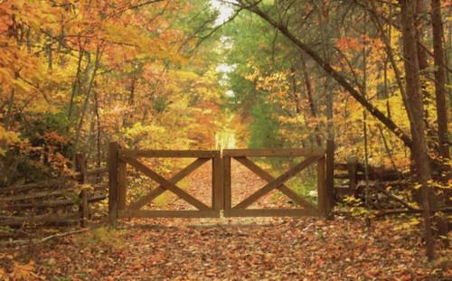 Autumnal Portal